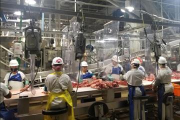 Film PVC utilisé sur une chaine de découpe de viande